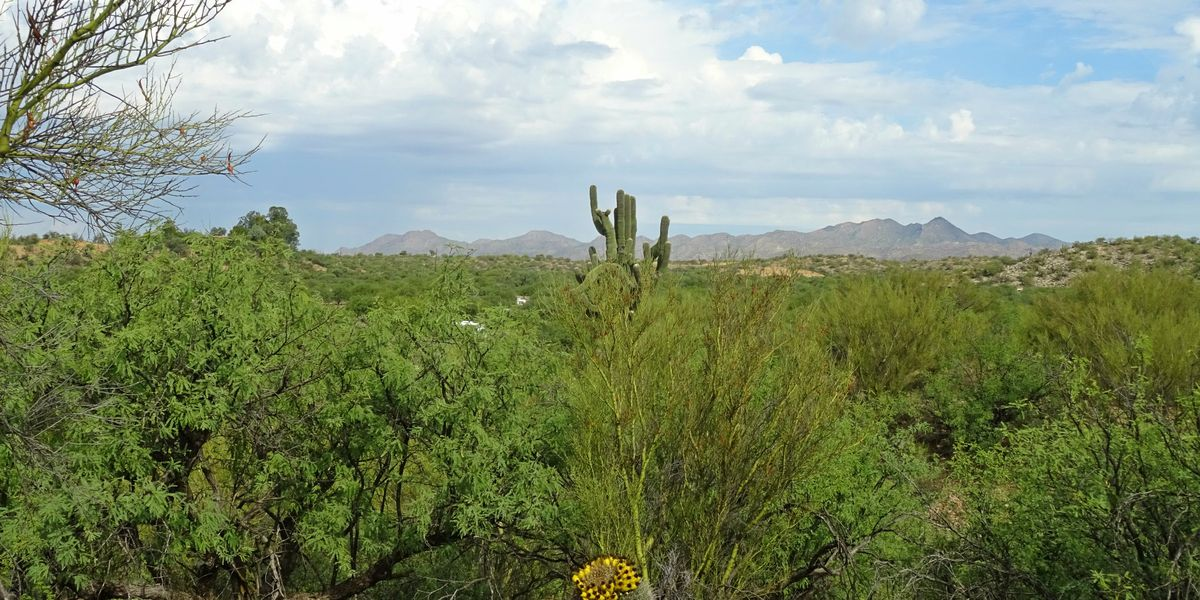 Catalina State Park to reopen following Bighorn Fire closure