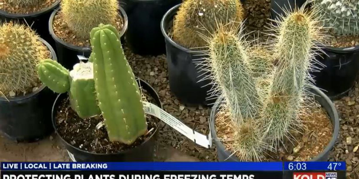 Protecting plants during freezing conditions