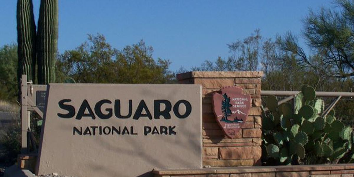 'Holiday Cactus Caravan' family auto tours at Saguaro National Park East