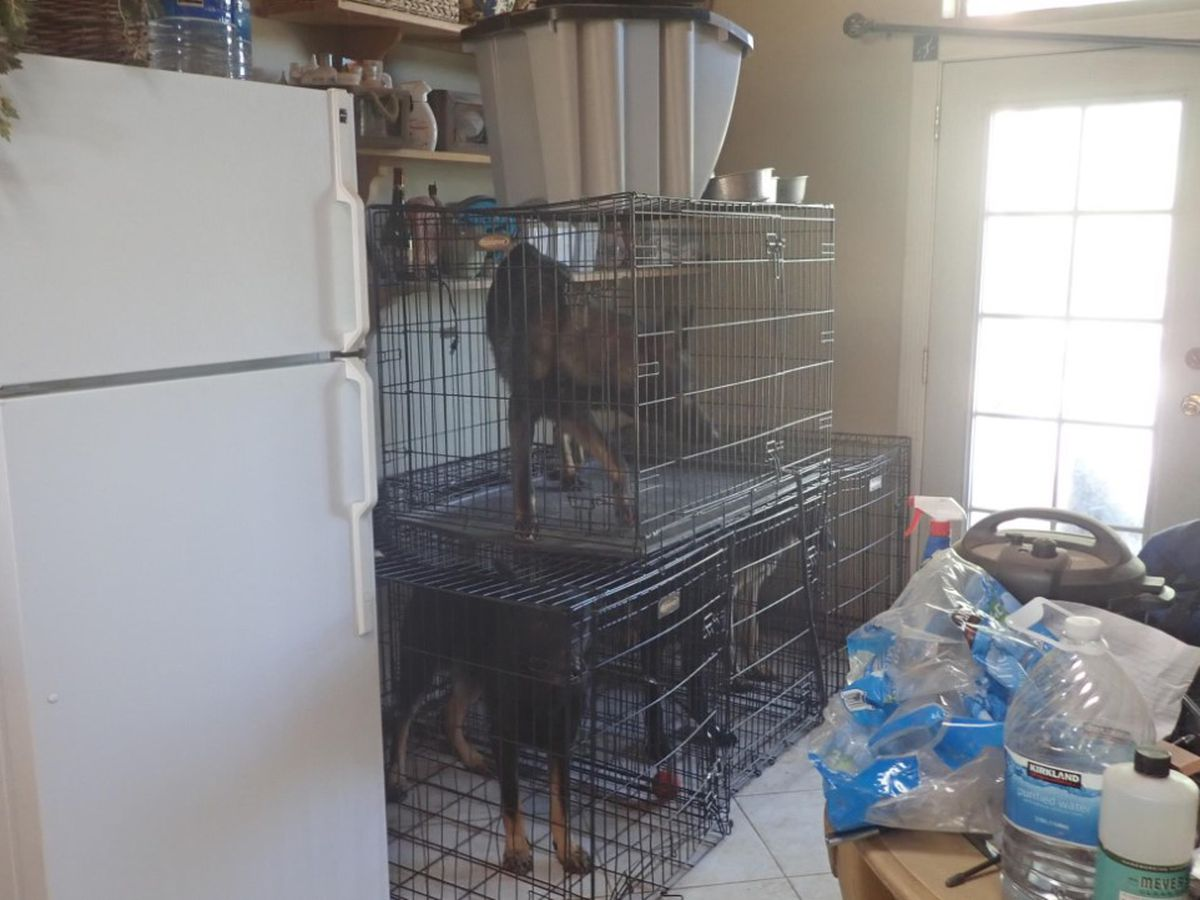 More than a dozen dogs seized in neglect investigation