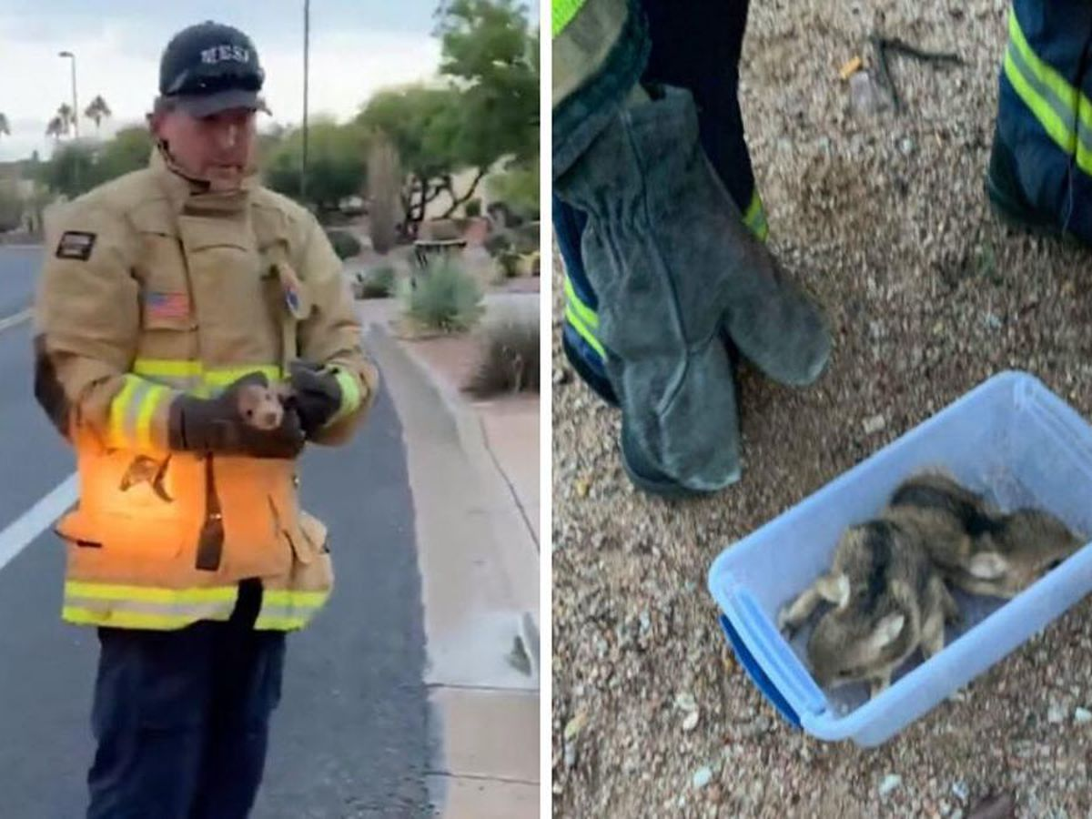 VIDEO: Mesa firefighters rescue young javelina from storm drain
