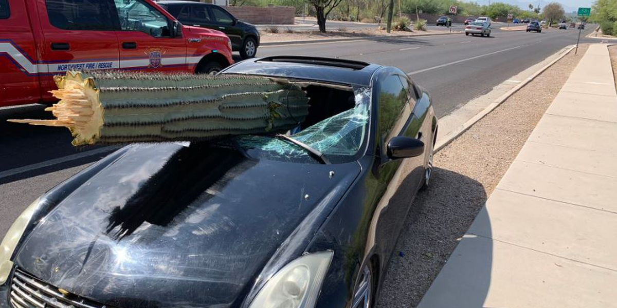 PCSD: Saguaro busts through vehicle windshield in Tucson crash; driver possibly impaired