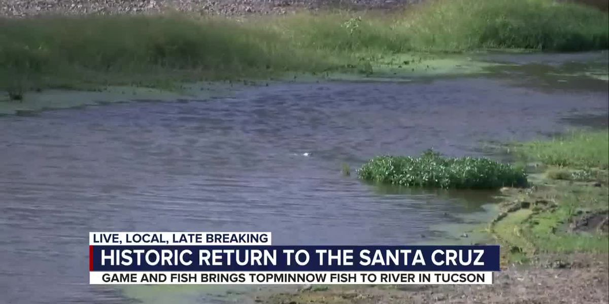 Santa Cruz River Heritage Project takes another big step by bringing back minnows