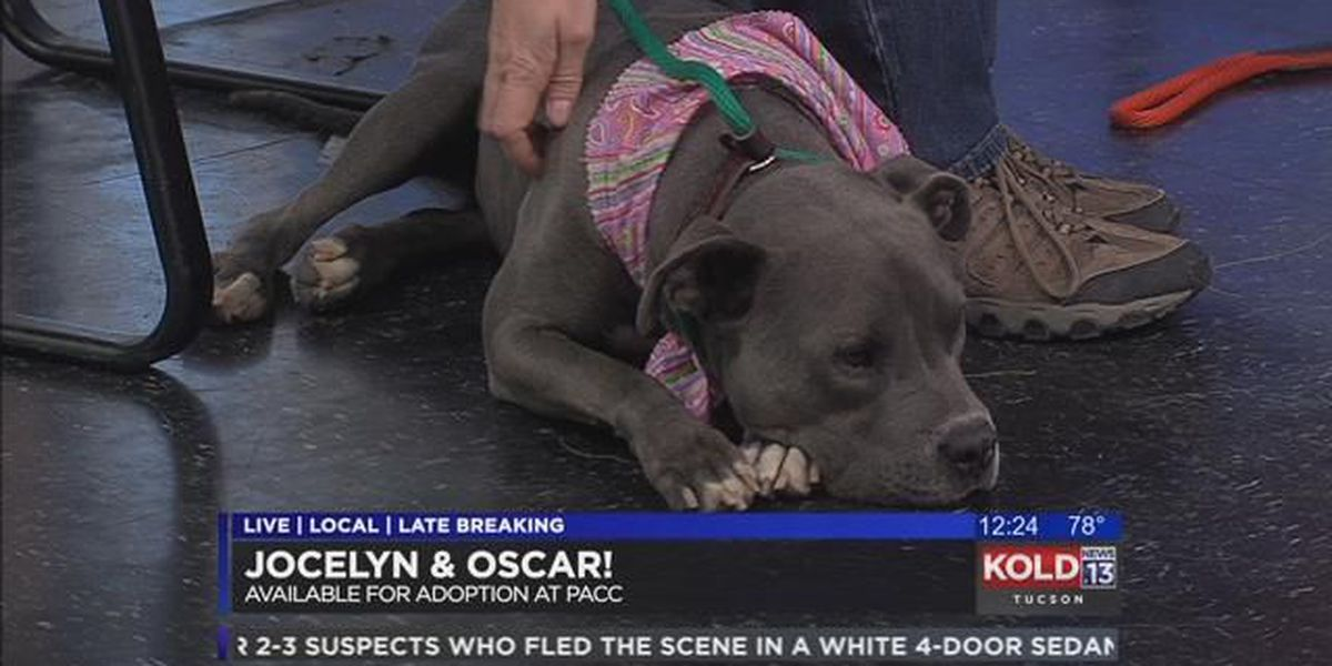 Tuesday's Tail: Meet Oscar and Jocelyn!