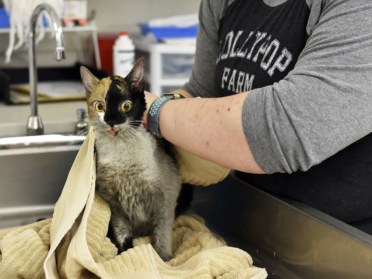 Humane Society: 97 cats survive house fire; some injured