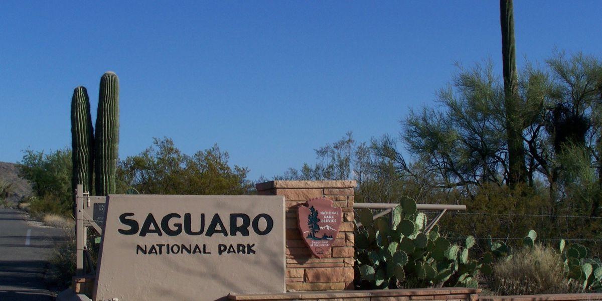 Volunteers work to keep Saguaro National Park clean