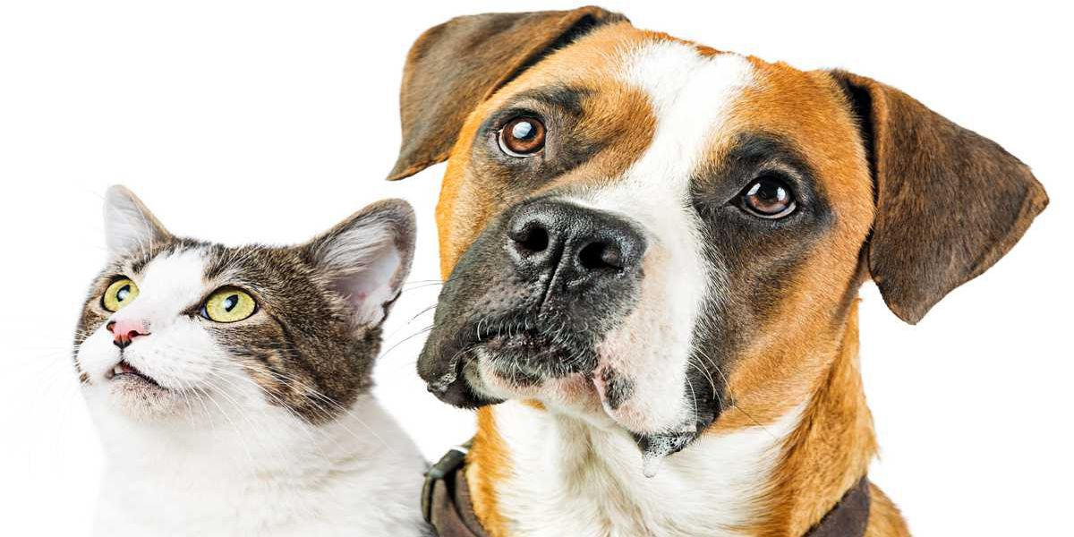 Friends of Pima Animal Care Center joins fundraising competition