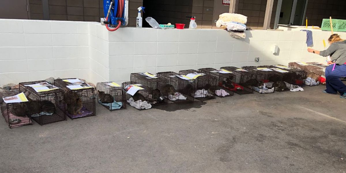 PACC in need of fosters, adopters for the 21 cats rescued from a midtown home
