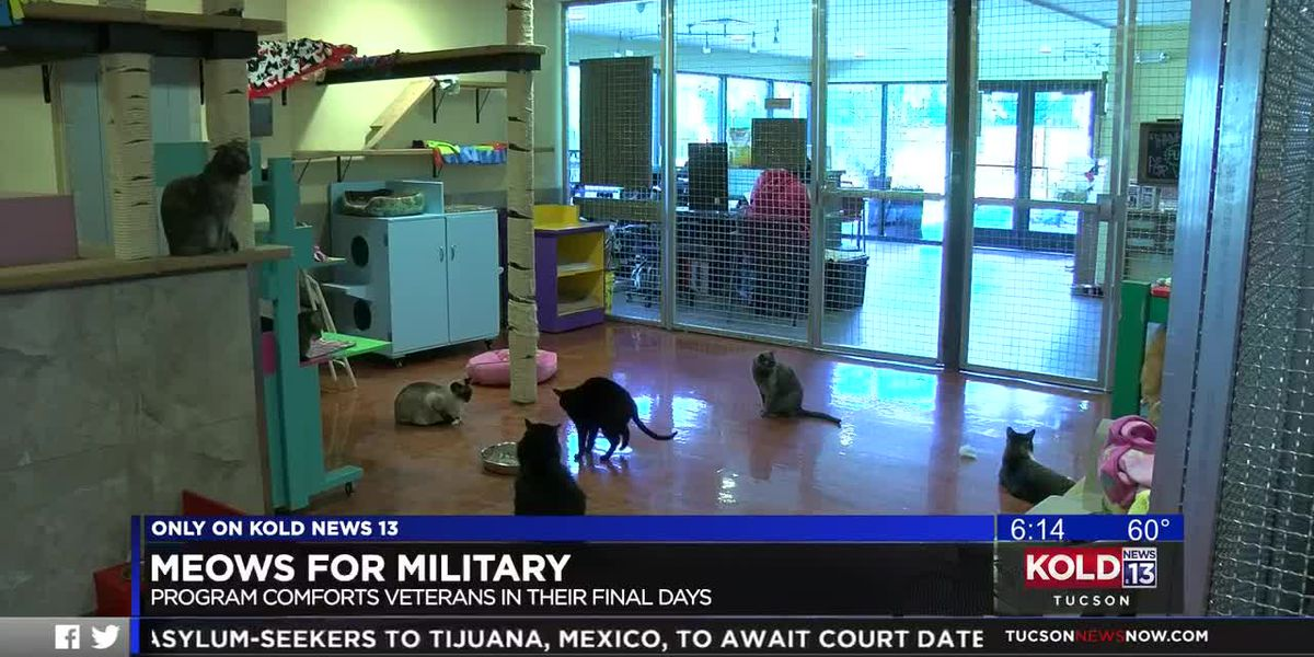 Meows for Military comforts veterans in their final days
