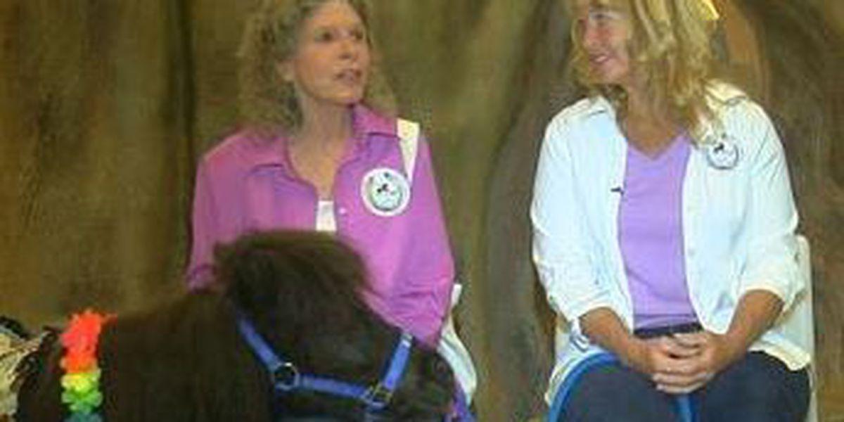 KOLD HEROES: Help on four hooves