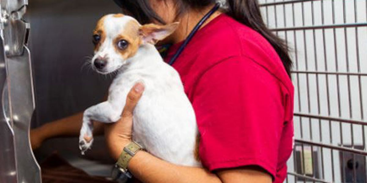 There is still time to help PACC 'Clear the Shelter'