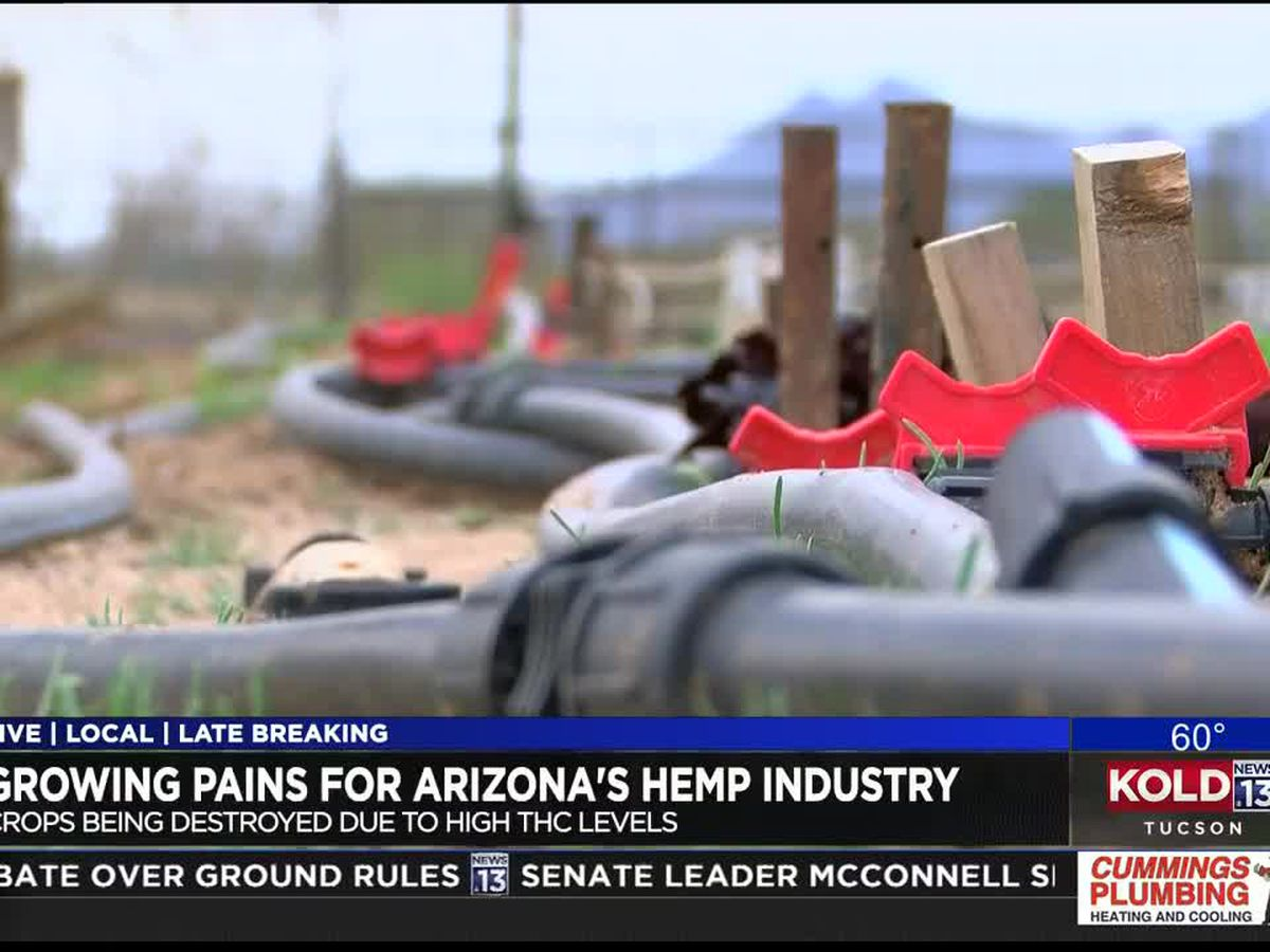 Local hemp farmer optimistic despite industry growing pains