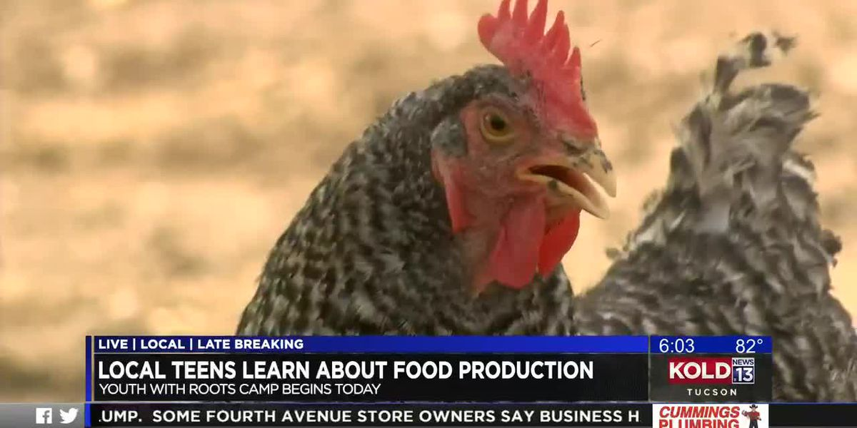 Tucson teens learn about food production