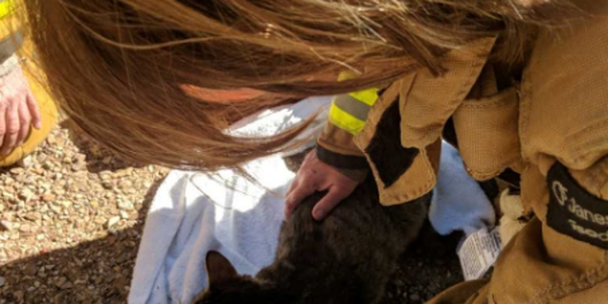Fire crews resuscitate family cat after house fire in Rita Ranch