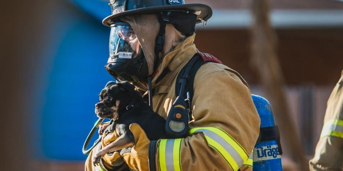 NWFD crews rescue family pet from house fire