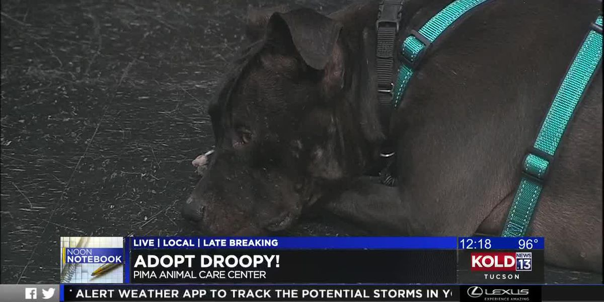 KOLD Noon Notebook: Adopt Droopy