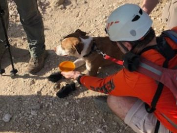 PCSD: Missing dog rescued from cliff near Sabino Canyon