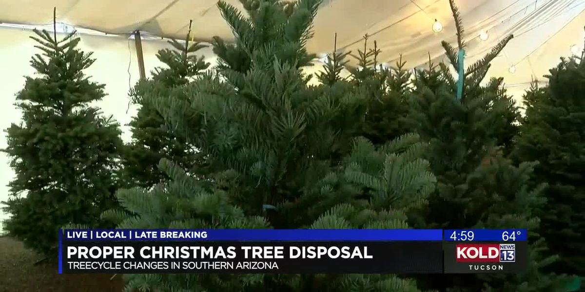 TreeCycle program encourages Tucson residents to be more sustainable