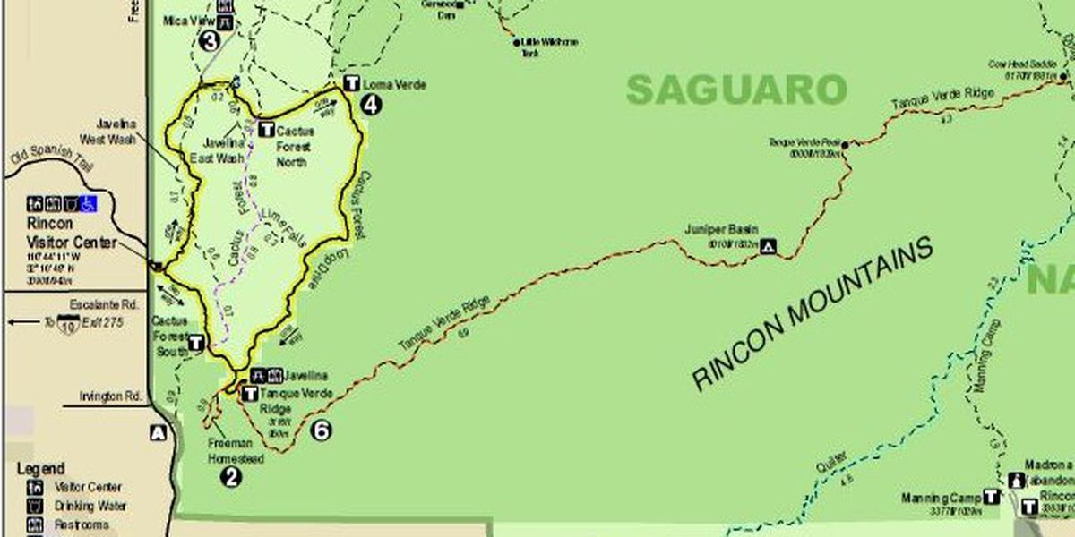 Crews to clear brush at Saguaro National Park East